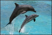 Dolphin watching is the most populat boat tour in Florida